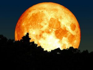 Women temporarily synchronize their menstrual cycles with the luminance and gravimetric cycles of the Moon.
